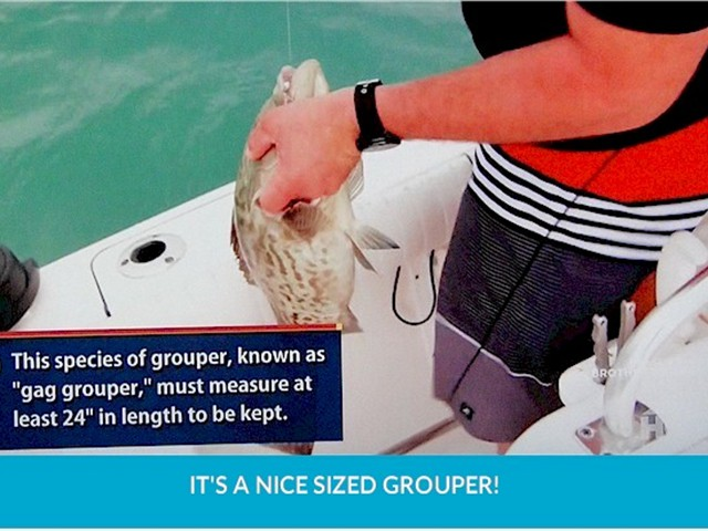 19-grouper2